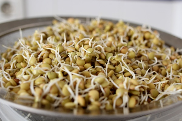 Sprouted lentils ready to be made into African-style dip